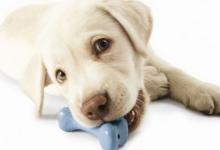 Photo of Kuinka säästää rahaa koirien leluostoksilla